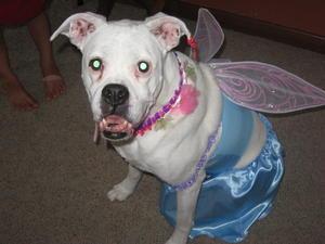 Zoey Girl (2002-2011)