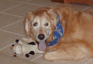 Ginger (1996-2010)
