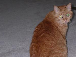 Willy (1997-2011)
