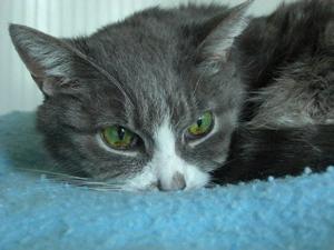 Allie (1993-2010)