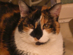 Hobbes (1993-2010)