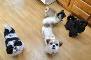 Maggie, Lily, Tia, Kiwi
